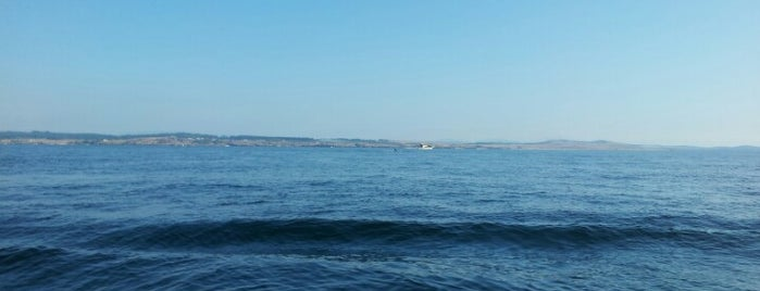 Whale watching is one of Seattle spots.