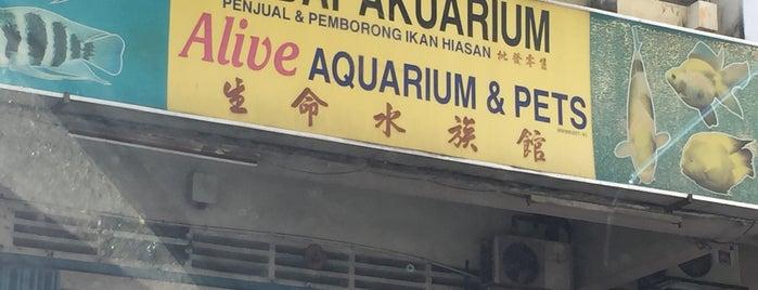 Alive Aquarium &Pets is one of jalan-jalan best.