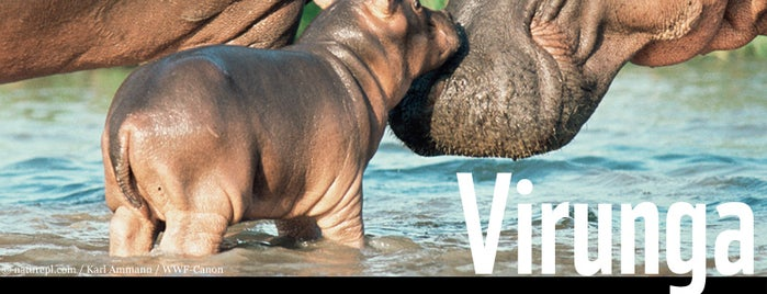 Virunga National Park is one of UNESCO World Heritage Sites.