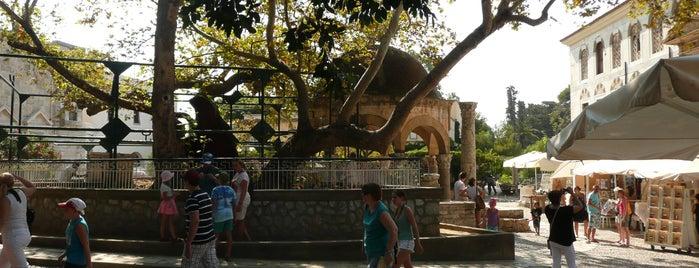 Hippocrates Plane Tree is one of Explore Kos.