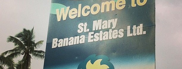 St. Mary Banana Estates is one of All-time favorites in Jamaica.