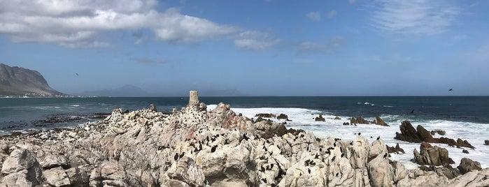 Stony Point Penguin Colony is one of No te lo Pierdas: a menos de 1h de Ciudad del Cabo.