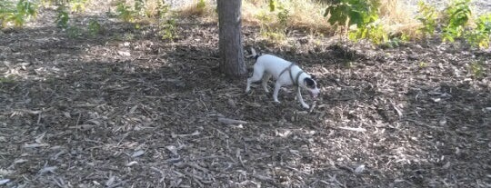 Columbia Dog Park is one of Tc.