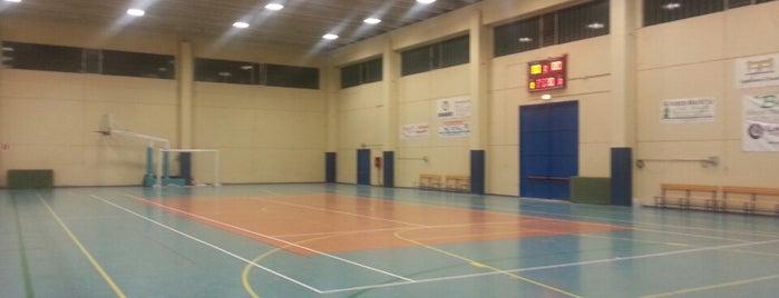 Palazzetto dello sport is one of Tutto Castelleone di Suasa.
