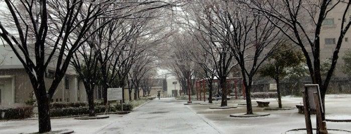 中津中央公園 is one of 公園.