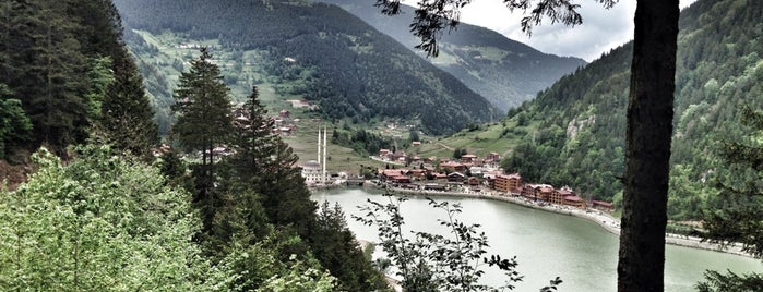 Uzungöl Doğa Yürüyüşü is one of karadeniz.