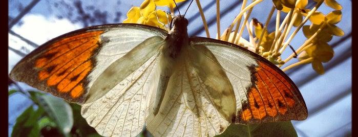 Butterfly Park (Taman Rama-Rama) is one of jalan-jalan best.
