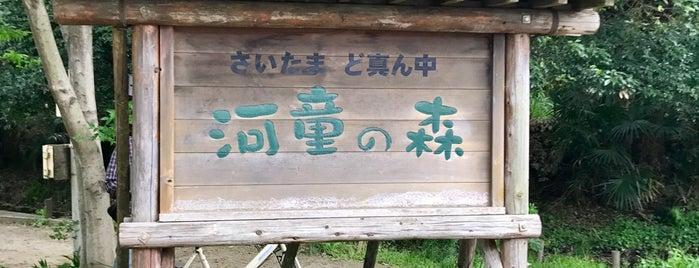 河童の森 is one of ☆.