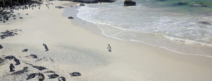 Boulders Beach Penguin Colony is one of South Africa.