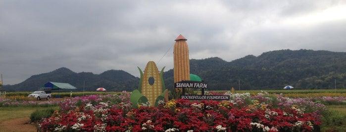 Suwan Farm is one of Khao Yai with Net&Mew.