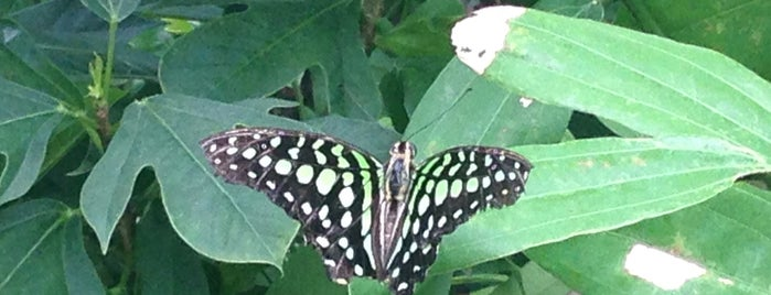 Bangkok Butterfly Garden and Insectarium is one of Thailand For Family.