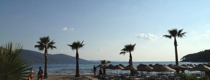 Marina Bar is one of Turkey.