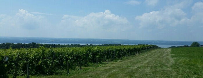 Long Point Winery is one of New York State Wineries.
