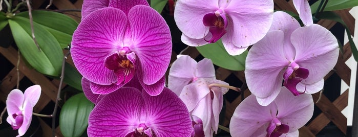Akatsuka Orchid Gardens is one of Enjoy the Big Island like a local.