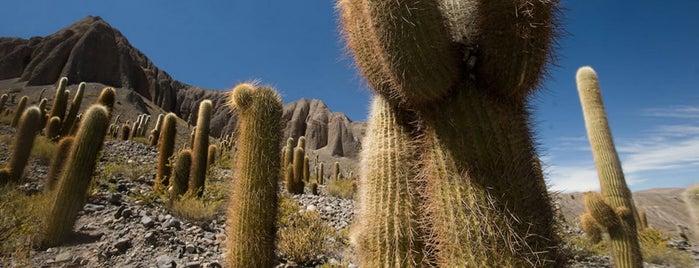 Parque Nacional Los Cardones is one of Parques Nacionales.