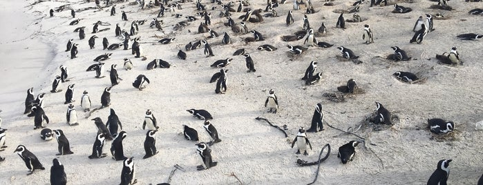 Boulders Beach is one of South Africa.