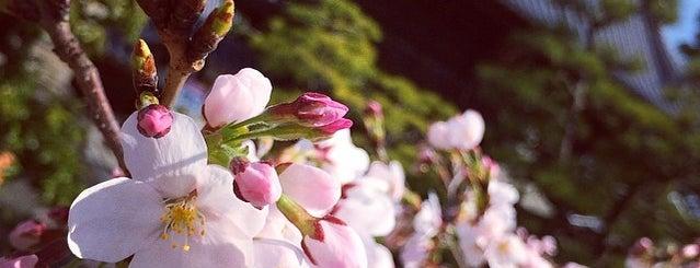 清滝山 安養院 西林寺 (第48番札所) is one of 四国八十八ヶ所霊場 88 temples in Shikoku.