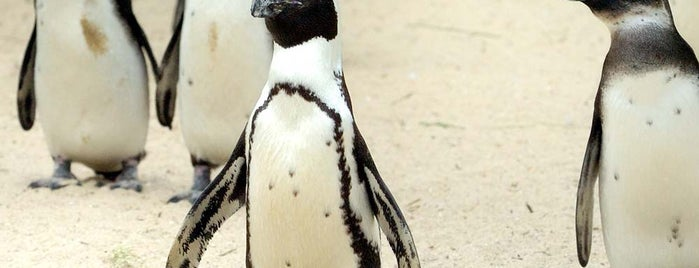 Tierpark EuregioZoo is one of Ausflugstipps Kundenmagazin unterwegs.