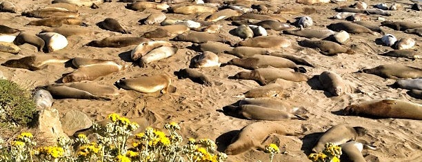 Elephant Seal Vista Point is one of USA Trip 2013 - The West.