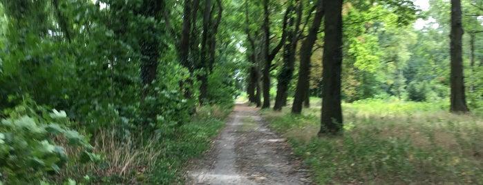 Zentralfriedhof Friedrichsfelde is one of Berlin parks.