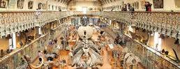 Galerie de Paléontologie et d'Anatomie comparée is one of Musées Visités.