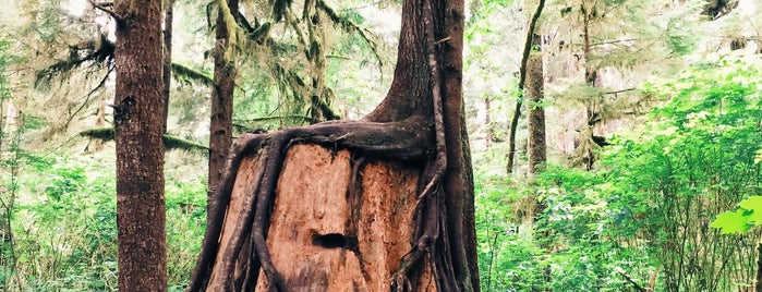 Quinault Rain Forest is one of Olympic National Park 💚.