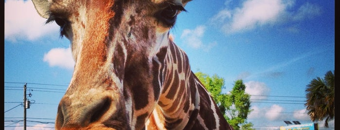 Gulf Breeze Zoo is one of Must-Do Pensacola.