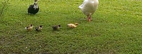 Eden Duck Pond is one of dog friendly.