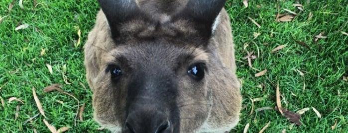 Urimbirra Wildlife Park is one of Great Family Holiday Attractions Around Australia.