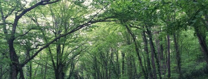 Belgrad Forest is one of İstanbul'daki Park, Bahçe ve Korular.