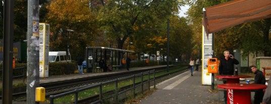 H Osloer Straße / Prinzenallee is one of Berlin tram line 50.