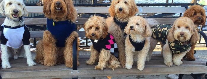 Our 17 Favorite Pup-Friendly Places