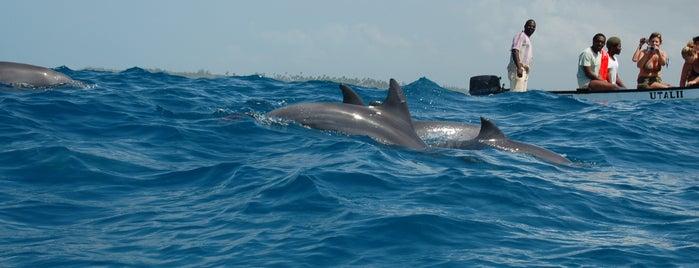 Zanzibar Dolphin View Paradise is one of Tanzanya Zanzibar Gezilecek Yerler.