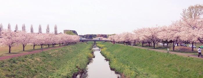 大堀川防災レクリエーション公園 is one of サイクリング.