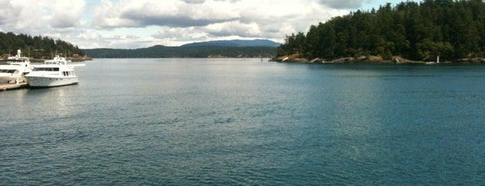Whale Watching is one of Orcas- San Juan Islands, WA.