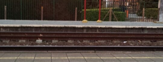Station Zele is one of regulars.