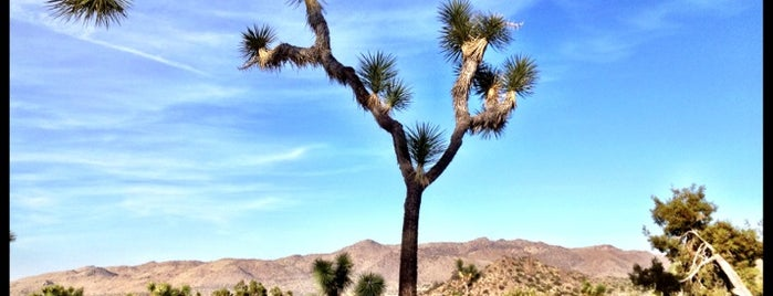 Black Rock Campground is one of Joshua tree.