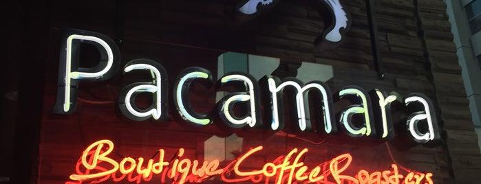 Pacamara Boutique Coffee Roasters is one of Bangkok.