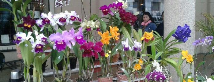 Floreria Floratel is one of Recomendados :).
