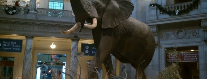 Henry The Elephant is one of The 15 Best Places with a Balcony in Washington.