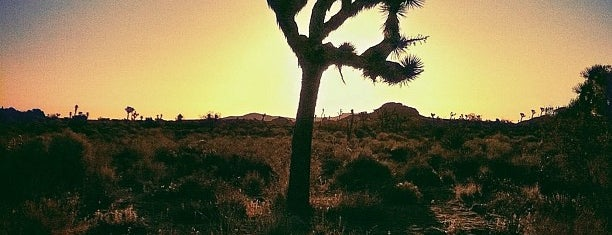 Joshua Tree National Park is one of LA/SoCal.