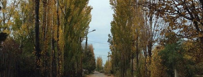 Chacras de Coria is one of Experience Mendoza.