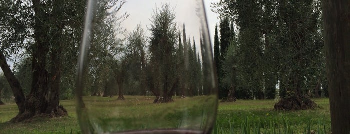 Azienda Agricola Félsina is one of Chianti Classico Producers.