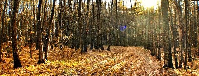 Битцевский лесопарк is one of Надо посетить.