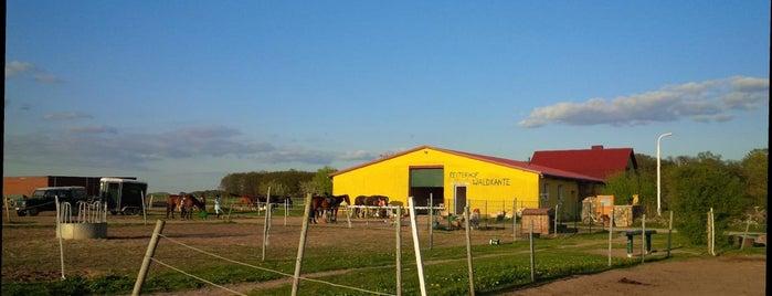 Reiterhof Waldkante is one of Brandenburg Blog.
