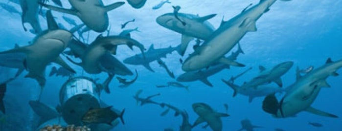 Shark Reef Control Room is one of FUN.