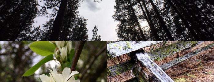 Metolius River is one of My Saved Places.