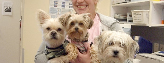Granville Island Veterinary Hospital is one of Veterinary Clinics Across Western Canada.