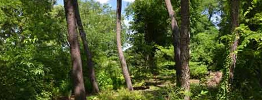 Hallett Nature Sanctuary is one of 92 Days of Summer in NYC.