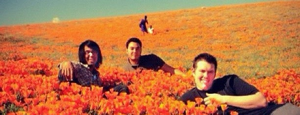 Antelope Valley Poppy Reserve is one of Guide to Los Angeles's best spots.